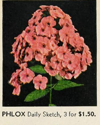 Vaughan's gardening illustrated 1947.png